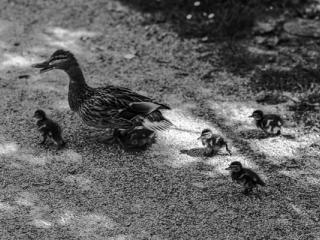 Tiere 52 - Gustav Eckart, Fotografie