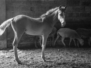 Tiere 53 - Gustav Eckart, Fotografia