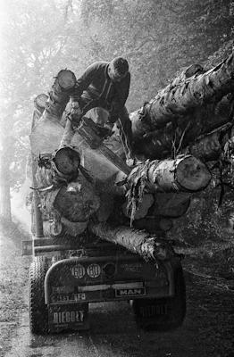 couper les troncs trop longs sur le camion  - Gustav Eckart, Photographie