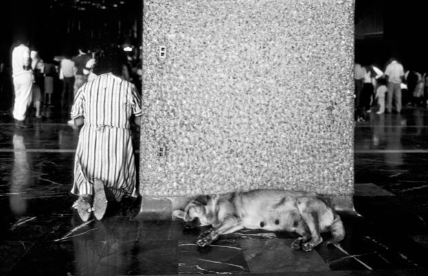 Mexico La Gouadeloupe Hund - Gustav Eckart, Photographie