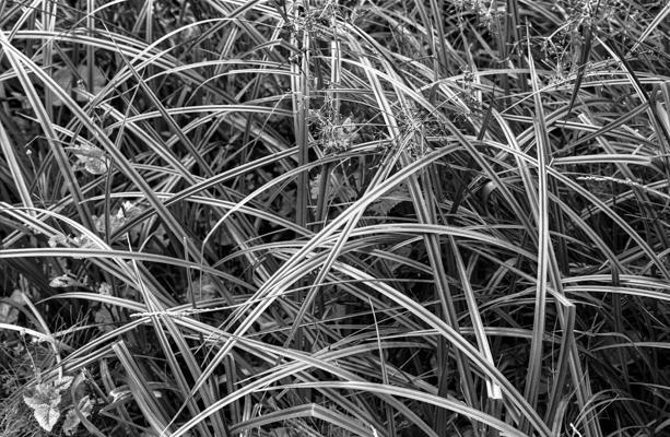 Natur 01 - Gustav Eckart, Fotografie