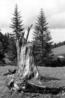 Natur 07 - Gustav Eckart, Fotografie