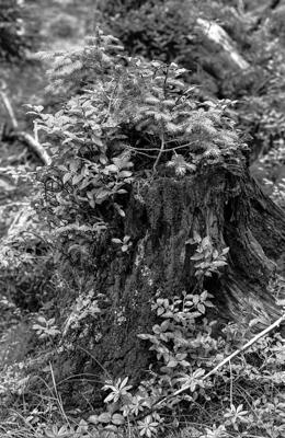 Natur 08 - Gustav Eckart, Fotografie