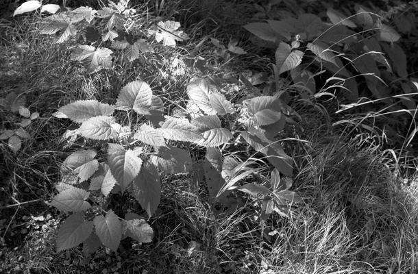 Natur 10 - Gustav Eckart, Fotografie