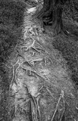 Natur 102 - Gustav Eckart, Photographie