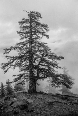 Natur 13 - Gustav Eckart, Fotografie