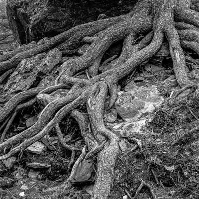 Natur-29 - Gustav Eckart, Fotografie
