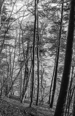 Natur 43 - Gustav Eckart, Fotografie