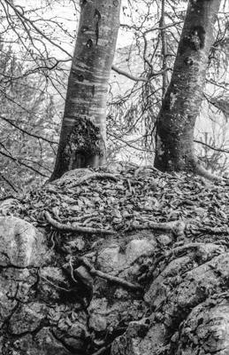 Natur 45 - Gustav Eckart, Fotografie