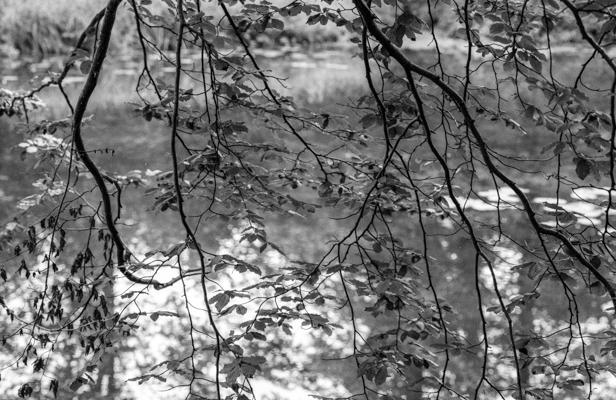 Natur 52 - Gustav Eckart, Fotografie
