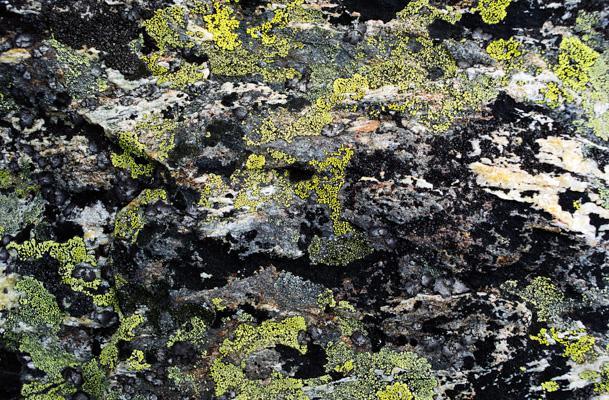Natur 63 - Gustav Eckart, Fotografie
