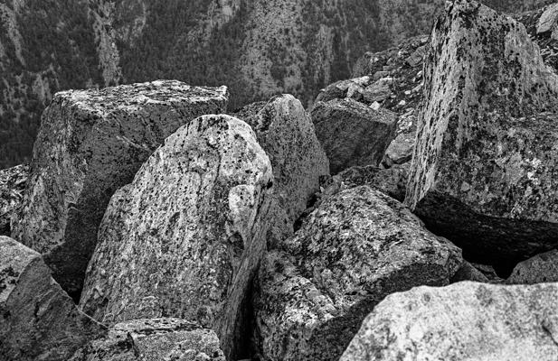 Natur 98 - Gustav Eckart, Fotografie