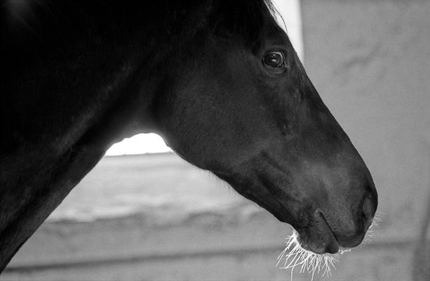 regard de cheval - Gustav Eckart, Photographie