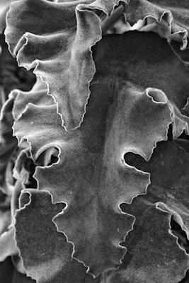 Pflanzen 24 - Gustav Eckart, Fotografie