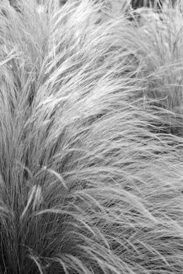 Pflanzen 25 - Gustav Eckart, Photographie