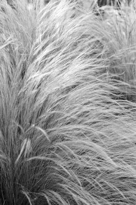 Pflanzen 25 - Gustav Eckart, Fotografie
