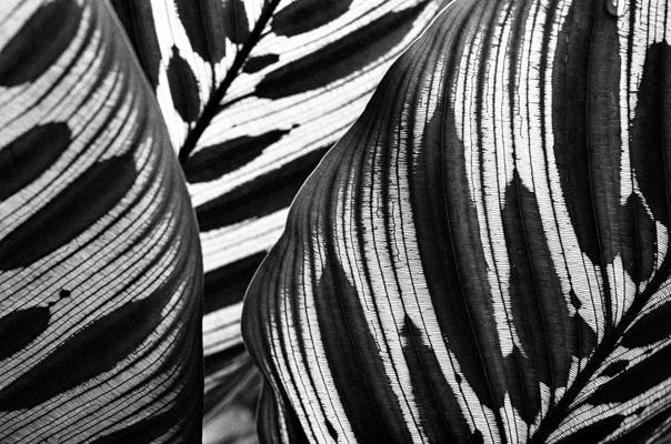 Pflanzen 61 - Gustav Eckart, Photography