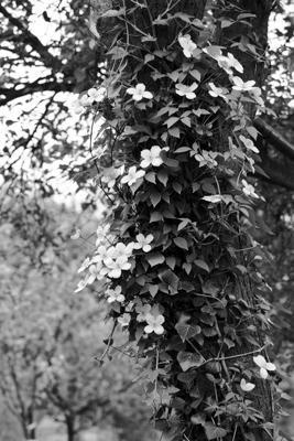 Pflanzen 66 - Gustav Eckart, Photographie