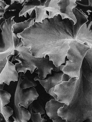 Pflanzen-73 - Gustav Eckart, Photographie