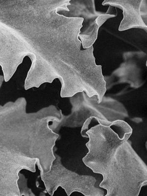 Pflanzen-74 - Gustav Eckart, Photographie
