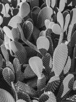 Pflanzen-75 - Gustav Eckart, Fotografie