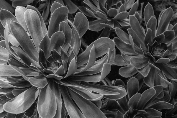 Pflanzen-87 - Gustav Eckart, Photography
