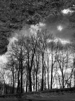 reflets d'arbres - Gustav Eckart, Photographie