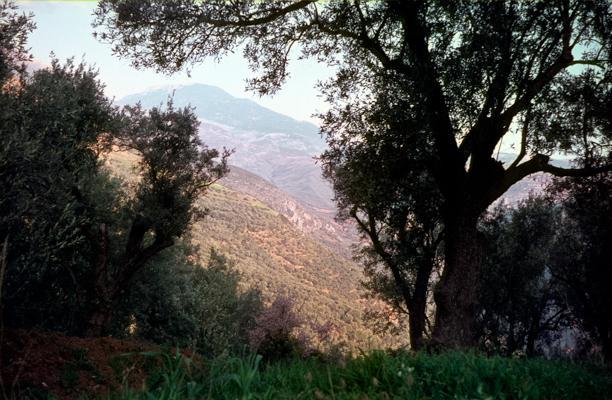 Delphi 1 - Gustav Eckart, Photographie