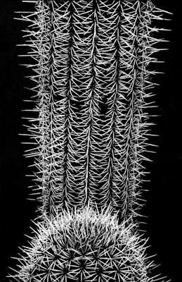 pflanzen-04.jpg - Gustav Eckart, Photography