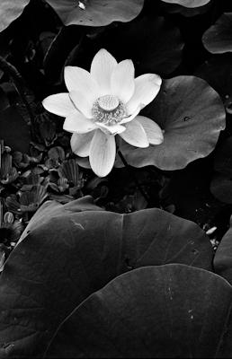 pflanzen-11.jpg - Gustav Eckart, Photography