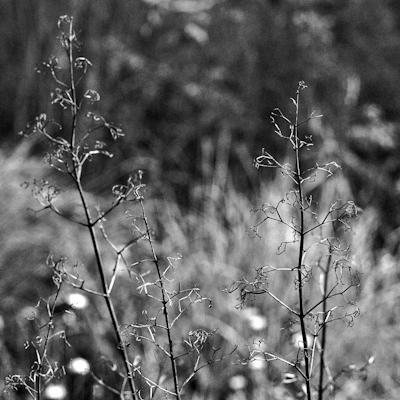 pflanzen-13.jpg - Gustav Eckart, Photography