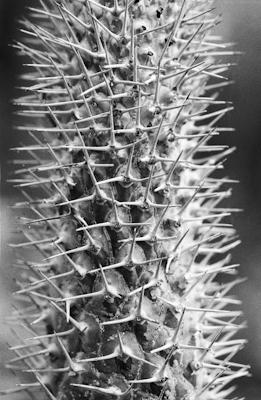 pflanzen-19.jpg - Gustav Eckart, Photography