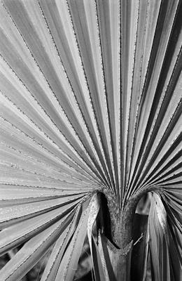 pflanzen-20.jpg - Gustav Eckart, Photography