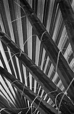 pflanzen-21.jpg - Gustav Eckart, Photography