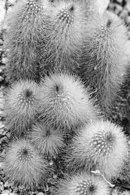 pflanzen-27.jpg - Gustav Eckart, Fotografie