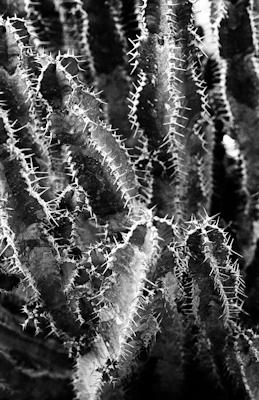 pflanzen-28.jpg - Gustav Eckart, Photography