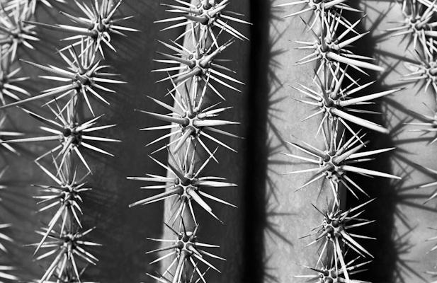 pflanzen-29.jpg - Gustav Eckart, Photographie