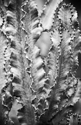 pflanzen-32.jpg - Gustav Eckart, Photography