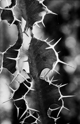pflanzen-33.jpg - Gustav Eckart, Photography