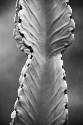 pflanzen-34.jpg - Gustav Eckart, Photography