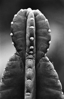 pflanzen-36.jpg - Gustav Eckart, Fotografie