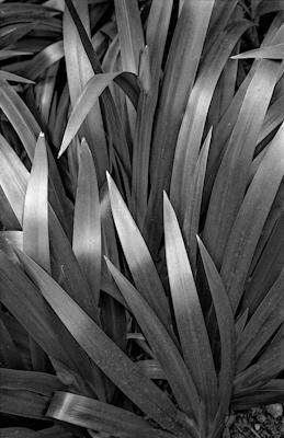 pflanzen-37.jpg - Gustav Eckart, Photography