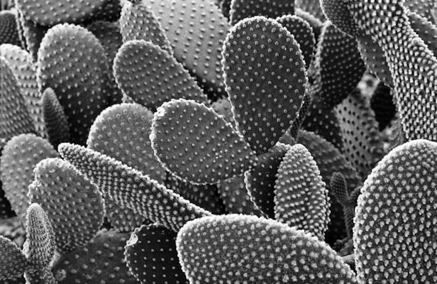 pflanzen-38.jpg - Gustav Eckart, Photography