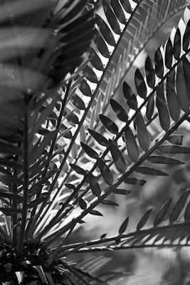 pflanzen-39.jpg - Gustav Eckart, Photographie