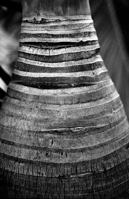 pflanzen-41.jpg - Gustav Eckart, Fotografie