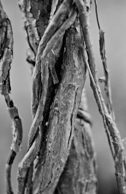 pflanzen-57.jpg - Gustav Eckart, Photography