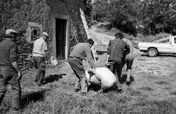 Schweineschlachten 06 - Gustav Eckart, Photographie