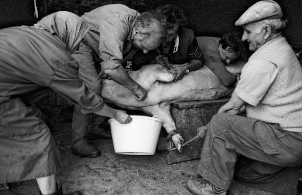 Schweineschlachten 13 - Gustav Eckart, Photographie