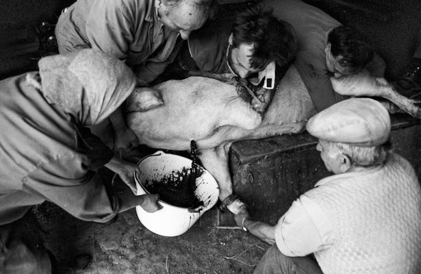 Schweineschlachten 14 - Gustav Eckart, Photographie