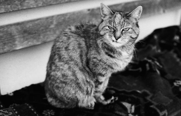 Old cat - Gustav Eckart, Photographie